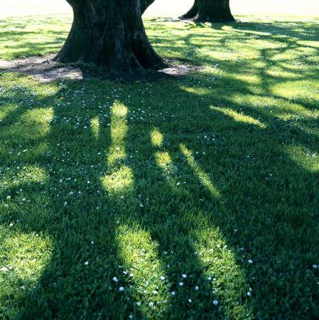 影のパターン 写真素材