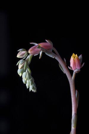 Cactus flower against rich black background