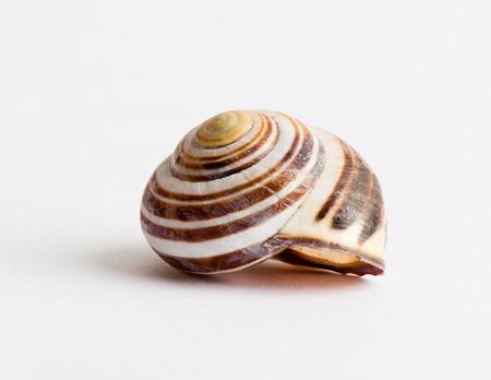 Snail shell Stockfoto