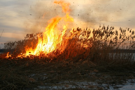 sedges dry fire with sparks and flashes of potent Stock Photo