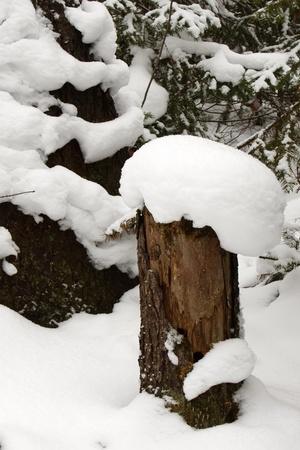 겨울 숲에 눈이 모자와 그루터기