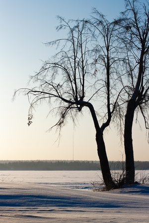 winter landscape with a lone tree near the pond photo