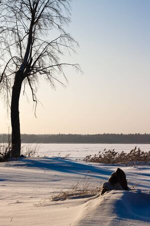winter landscape with a lone tree near the pond Stock Photo - 11754904