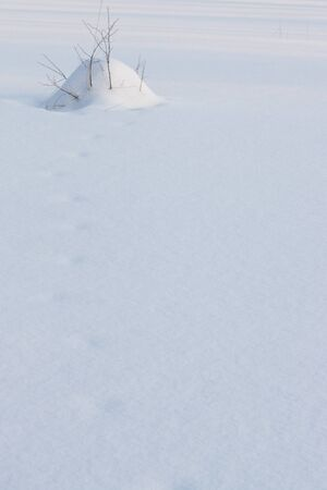 snow mound with twigs and footprints on winter pond photo