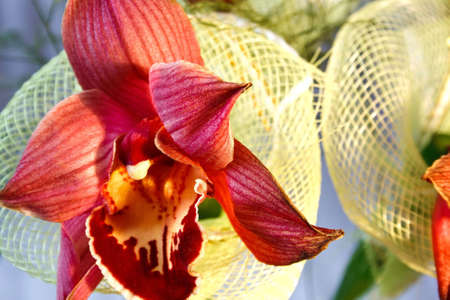 bright red orchid with decorative mesh of the bunch