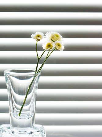 검은 색과 흰색 배경에 야생 꽃의 무늬와 유리