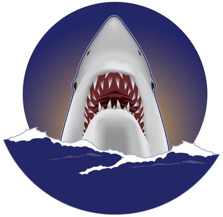 dead sea: Great white shark Illustration