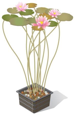 water lilies: Los lirios de agua en una cesta de maceta Vectores