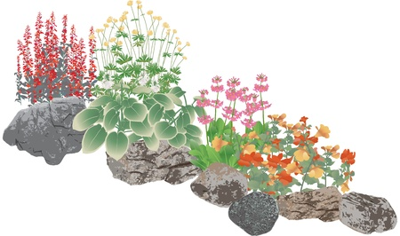 Rockery plants, rock pool edging plants Vector