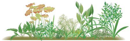 gerber: Plants, border edging