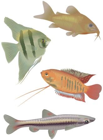 4 tropical fish Stock Vector - 13848699