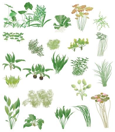 Acuario y el estanque plantas, Ilustración de vector