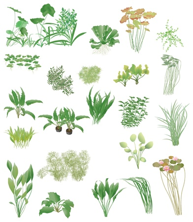 Aquarium-en vijverplanten, Vector Illustratie
