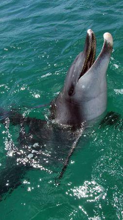 cetaceans: Wild dolphin near Rockingham, Western Australia.Original Image: Transfer Jan 2007 160.jpg