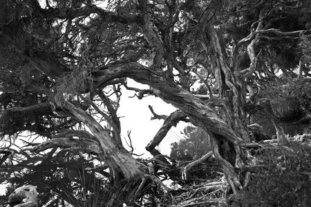 Paperbarks at Bremer Bay in Black & White