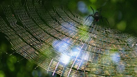 Spider web in the rain forest near Cairns