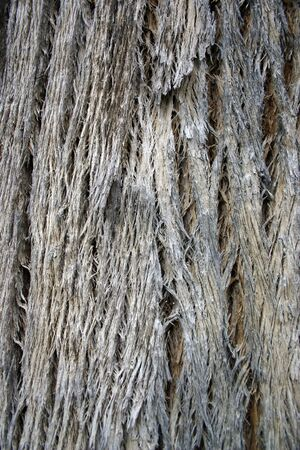 Closeup of fibreous rare tuart tree bark Stock Photo