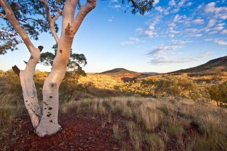 fleck: Fine art landscape image of early morning in the Karijini National Park Pilbara, Western Australia  Image features the white trunk of a desert gum contrasting with sun-lit mountains in the background with a cloud fleck blue sky  Stock Photo