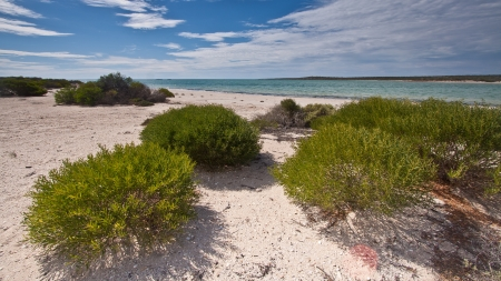 A landscape view of a tranquil tidal inlet with bright green shrubbery on a white beach leading into the image and horizon