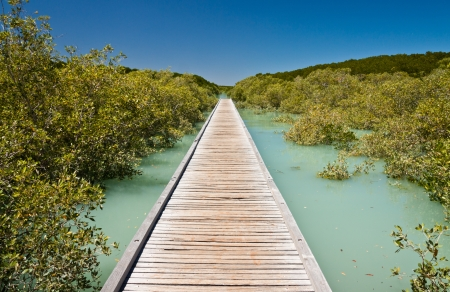A centrally placed wooden jetty leading to a vanishing point between colorful bright green mangroves and a background of a clear blue sky