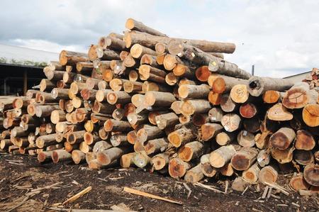 logs: Timber logs Stock Photo