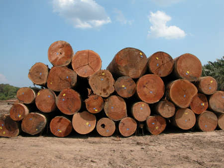 durable: Selangan Batu logs. These very durable hardwood are mainly found in the tropical rainforests of Borneo.