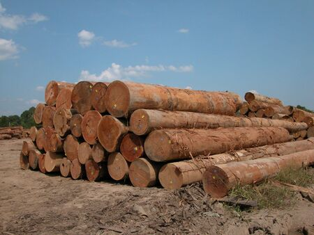 exporter: Malaysia is the largest producer of tropical hardwood in the world. These Selangan Batu logs are mainly exported to India, Vietnam and China for making outdoor furniture, decking,railway sleepers and used in the construction industry