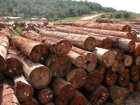 cleared: Much of the forests in Borneo has been cleared to make way for large scale oil palm plantation. These are mixed light hardwood which can be used in the construction and plywood industries. Stock Photo