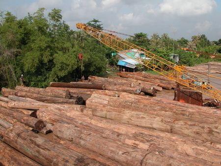 exporter: Hardwood logs in Mythoi, Vietnam. Vietnam is a leading exporter of furniture in the world although ih has to import most of the timber to manufacture the furniture.