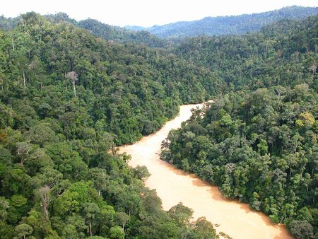 longest: Tropical rainforests and the Rajang River in Sarawak, East Malaysia. The Rajang is the longest river in Malaysia.
