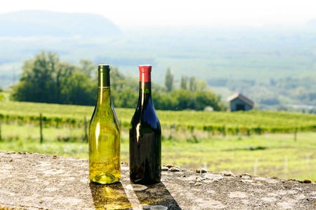 young leaves: two Bottles of red and white wine in front of vineyards