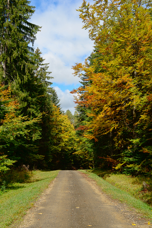 both sides: small road in autumn with colorful trees on both sides