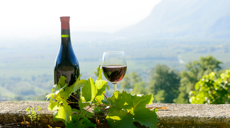 red wine: a bottle and a glass of red wine,  on vineyard  background Stock Photo