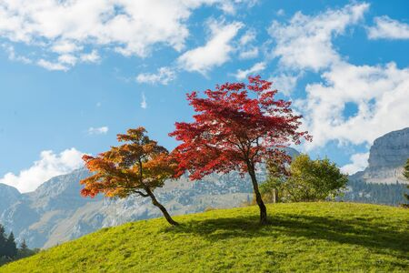 two trees with beautiful fall colors Stock Photo