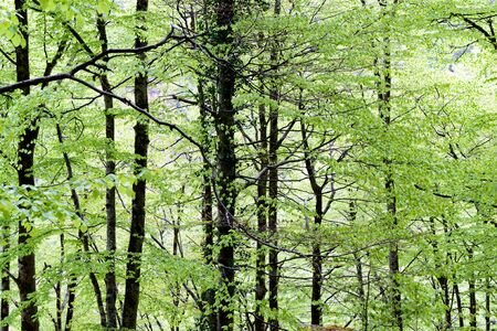 french countryside: foliage in the forest in french countryside Stock Photo