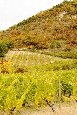 Vineyards in France, autumn, Drome,  wine Clairette de Die