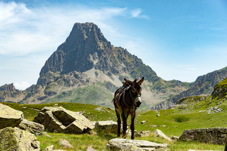 a donkey with the Pic du Midi dOssau in the French Pyrenees on background