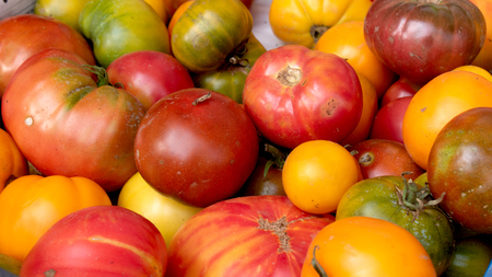 the different rustic tomatoes from the garden