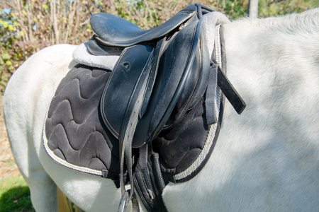 a leather saddle on the white  horse