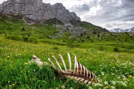 view of animal skeleton in the grass