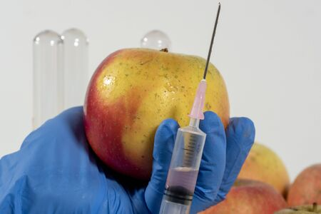 close up of woman with gloves uses a syringe. Genetic modification of fruits and vegetables.
