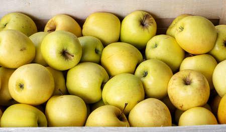 fresh golden apples in a wooden crate Foto de archivo