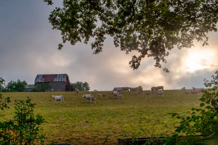 cows grazing in the meadow under a dramatic sky