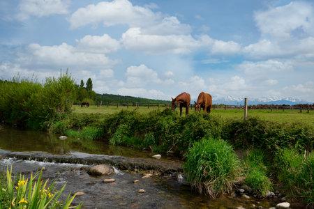 two brown horses near the small river Foto de archivo