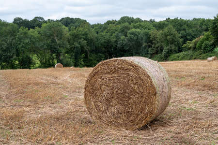 a harvested field with straw bales