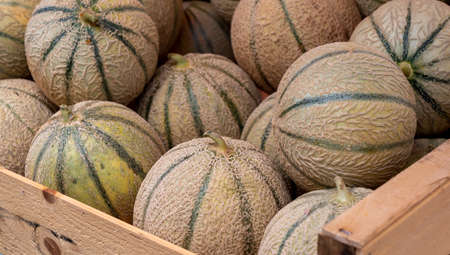 delicious organic melons on the french marketplace