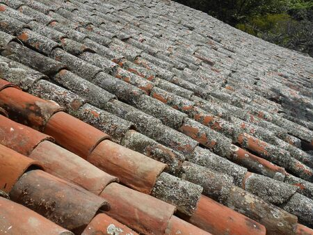 Tile roof covered with moss