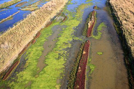 Old salt marsh on the island of Re