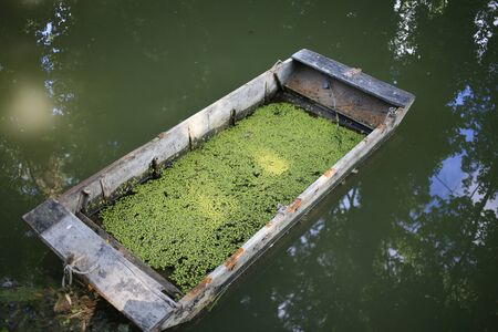 boat filled with water and covered with duckweed