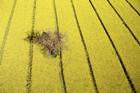 Aerial view of a chuck maker in the middle of rapeseed Stock Photo